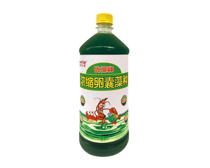 卵囊藻种(浓缩高活型)