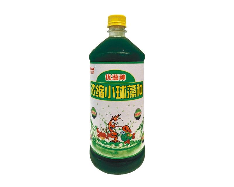 武汉小球藻种(浓缩高活型)