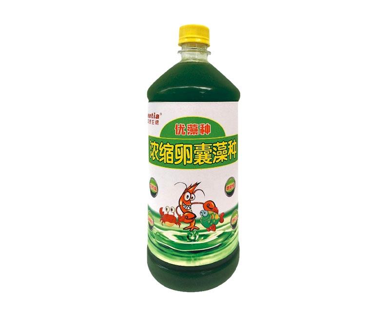 武汉卵囊藻种(浓缩高活型)