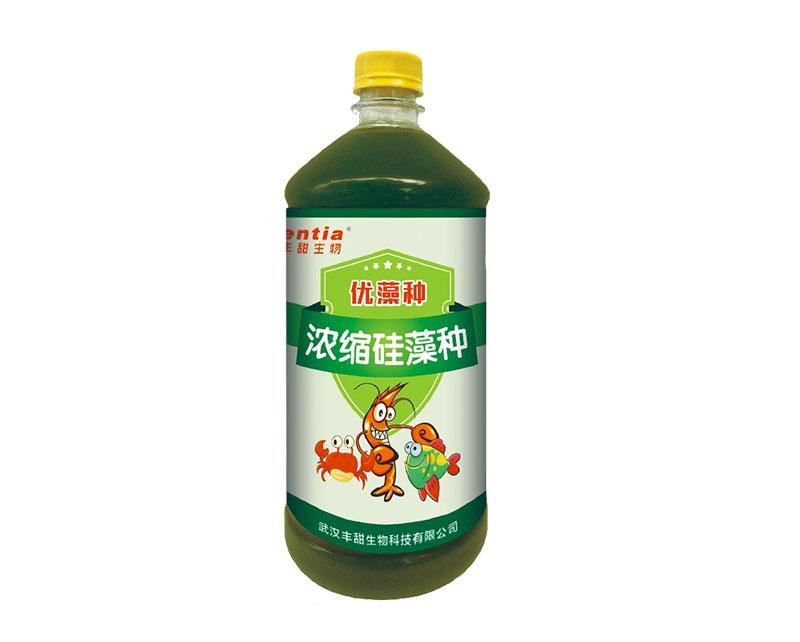 武汉硅藻种(浓缩高活型)